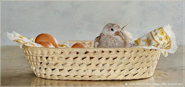 Wielkanoc zdjęcie